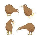 Kiwi birds set. Cute cartoon kiwi birds set. Vector image. Australian birds Stock Photo