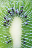 Kiwi close-up Royalty Free Stock Image