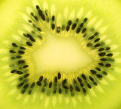 Kiwi. Close up on a kiwi fruit Royalty Free Stock Images
