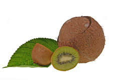 Kiwi and coco Stock Images
