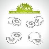 Kiwi Collection de frutos frescos com folha Ilustração do vetor Isolado ilustração do vetor