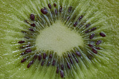 Kiwi in the context Royalty Free Stock Photography