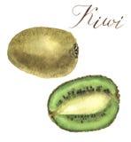 Kiwi d'aquarelle Illustration d'isolement tirée par la main botanique Photographie stock