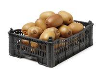 Kiwi dorato Actinidia chinensis del taglio ed intero del kiwifruit/ immagine stock libera da diritti