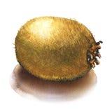 Kiwi entier cru frais en gros plan d'isolement, illustration d'aquarelle Image stock