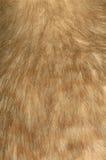 Kiwi feathers. Background of feathers of little spotted kiwi, Apteryx oweni, New Zealand royalty free stock image