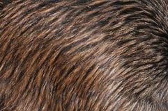 Kiwi feathers royalty free stock photos