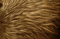 Kiwi feathers. Background of feathers of North Island brown kiwi, Apteryx australis stock photo
