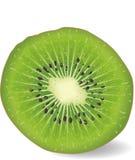 Kiwi fruit royalty free illustration