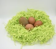 Kiwi fruit with eggs in the green paper nest on the white background stock image
