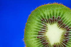 Kiwi Fruit Inside. A cut kiwi fruit closeup against a blue backdrop for easy extraction Stock Photography