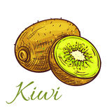 Kiwi fruit with juicy slice isolated sketch. Ripe kiwi fruit sketch. Tropical green kiwi with juicy slice isolated icon for cocktail menu, dessert recipe or farm Stock Images