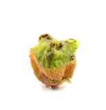 Kiwi fruit, macro Royalty Free Stock Photo