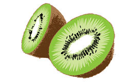 Kiwi Fruit Vector Stock Photography