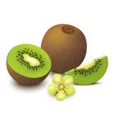 Kiwi fruit. Whole kiwi fruit and his sliced segments with flower  on white background. Vector illustration Royalty Free Stock Photo
