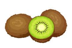 Kiwi fruits. Vector illustration. Stock Images