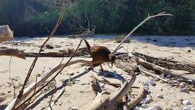 Kiwi i Nya Zeeland på Roadtrip i Abel Tasman National Park royaltyfri fotografi