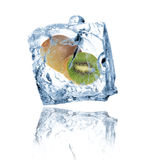 Kiwi in ice cube. Isolated on white background Stock Photo