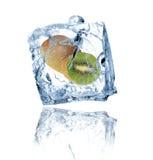 Kiwi in ice cube Stock Photo