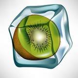 Kiwi in ice cube Stock Photography