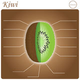 Kiwi Infogram Royalty Free Stock Images