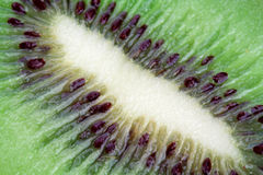 Kiwi by a large plan. In a cut royalty free stock photography