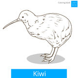 Kiwi learn birds coloring book vector Stock Image
