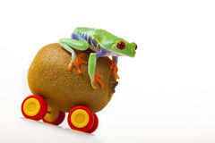 Kiwi Mobile Frog Royalty Free Stock Photo