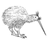 Kiwi monocromático dibujado mano del pájaro de la tinta Fotos de archivo