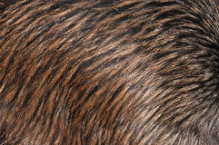 Kiwi piórka Zdjęcia Royalty Free