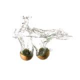 Kiwi pluśnięcie na wodzie, odosobnionej Obrazy Royalty Free