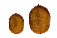 Kiwi przeciw białemu tłu Zdjęcia Stock