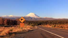 Kiwi Road Sign And Volcano Mt. Ngauruhoe At Sunset, New Zealand Stock Images