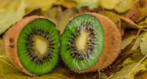 Kiwi salvaje en el bosque Fotografía de archivo