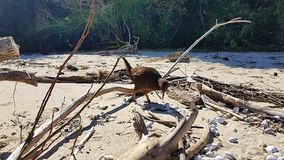 Kiwi in New Zealand on Roadtrip in Abel Tasman National Park royalty free stock photography