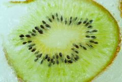 Kiwi slice frozen stuck in ice concept abstract. Photo Royalty Free Stock Photography