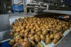 Kiwi sul nastro trasportatore Fotografia Stock Libera da Diritti