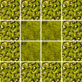 Kiwi textures inside square shapes arranged as background Stock Image