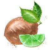 Kiwi vector logo design template. fruit or food Royalty Free Stock Photos