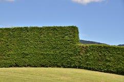Kiwi Wall Royalty Free Stock Photo