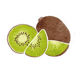 Kiwi watercolor painting Royalty Free Stock Image