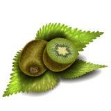 Kiwi zwei mit Blättern Stockfoto