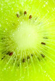 Kiwibakgrund arkivbilder