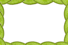 KiwiBilderrahmenkonzept Stockbild