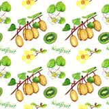 Kiwifruit branches with ripe fruits, male and female flowers, cut half with inscription, white background. Kiwifruit branches with ripe fruits, male and female Stock Photography