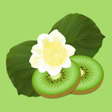 Kiwis fruit and flowers Royalty Free Stock Photography