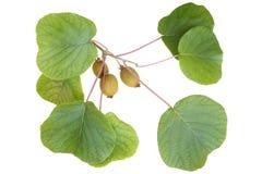 Kiwitak met vruchten en bladeren stock foto's