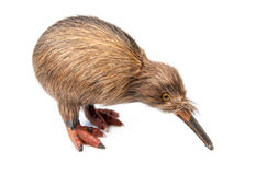 Kiwivogelspielzeug stockfotos