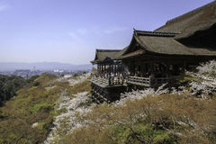 Kiyomizu寺庙和樱花在京都 免版税库存照片