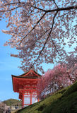 Kiyomizu寺庙和樱花在京都 库存图片